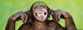 immagine-timeline-scimmia-sorridente.jpg